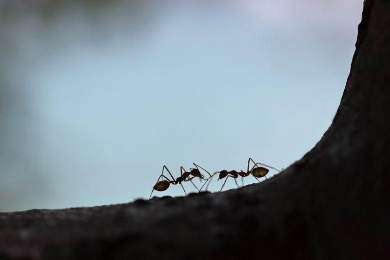 Ants crawling